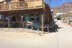 Burros in the shade