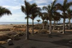 Palm Trees at Playa Lima