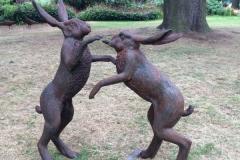 Hares dancing