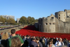 Poppies fill the moat